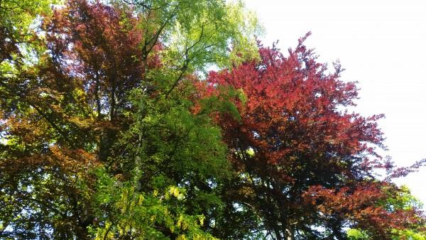 DIY-Farbenfrohe-Raumduftdeko-f-r-den-Herbst